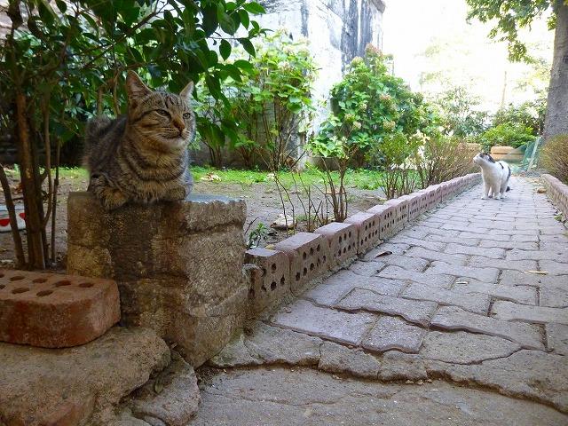 イスタンブール猫
